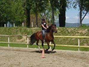 cheval en provence