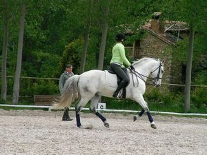 stage equitation espagne