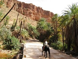 voyage a cheval au maroc