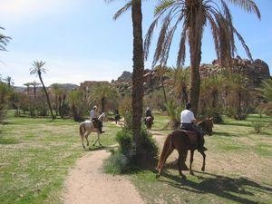 Trek a cheval MAROC : LA RONDE D'ESSAOUIRA EN RIADS