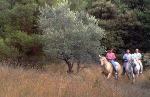 randonnee equestre en provence