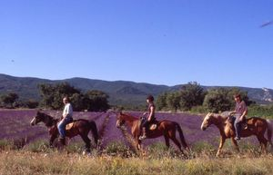 horseback holiday in provence