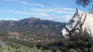 Randonnée équestre ESPAGNE : ITINERANCE ET GASTRONOMIE EN CATALOGNE A CHEVAL - Voyage 5 jours à Cheval