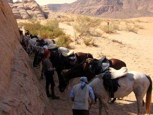 rando a cheval en jordanie
