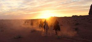 cheval en jordanie