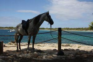 randonnee a cheval baleares