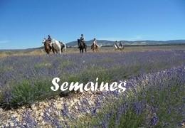 Semaines à cheval en Provence