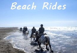 horse rides on beach