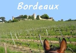 Bordeaux wine horseback ride