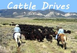 ranch horse cattle work