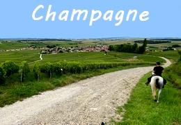Randonnées à cheval en Champagne